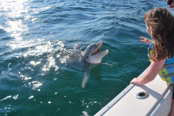 Image of Dolphin on the side of a rented Pontoon boat saying hello to the group